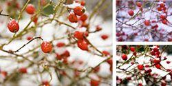 Snow_1_275